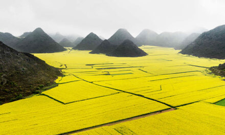 3 mágicos mares de flores en China