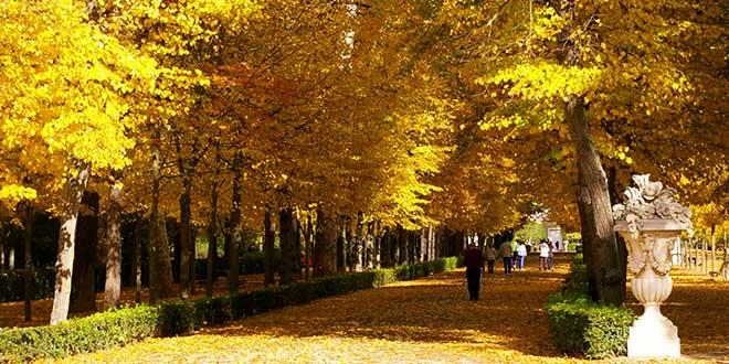 De paseo por los m gicos jardines de aranjuez el viajero for El jardin del principe
