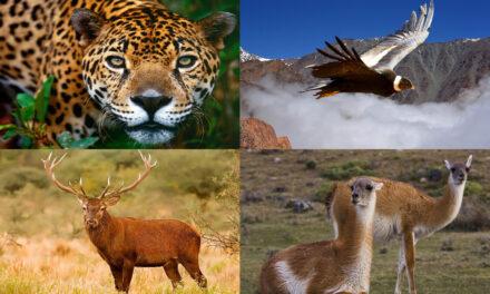 Santuarios para animales en Argentina (II)