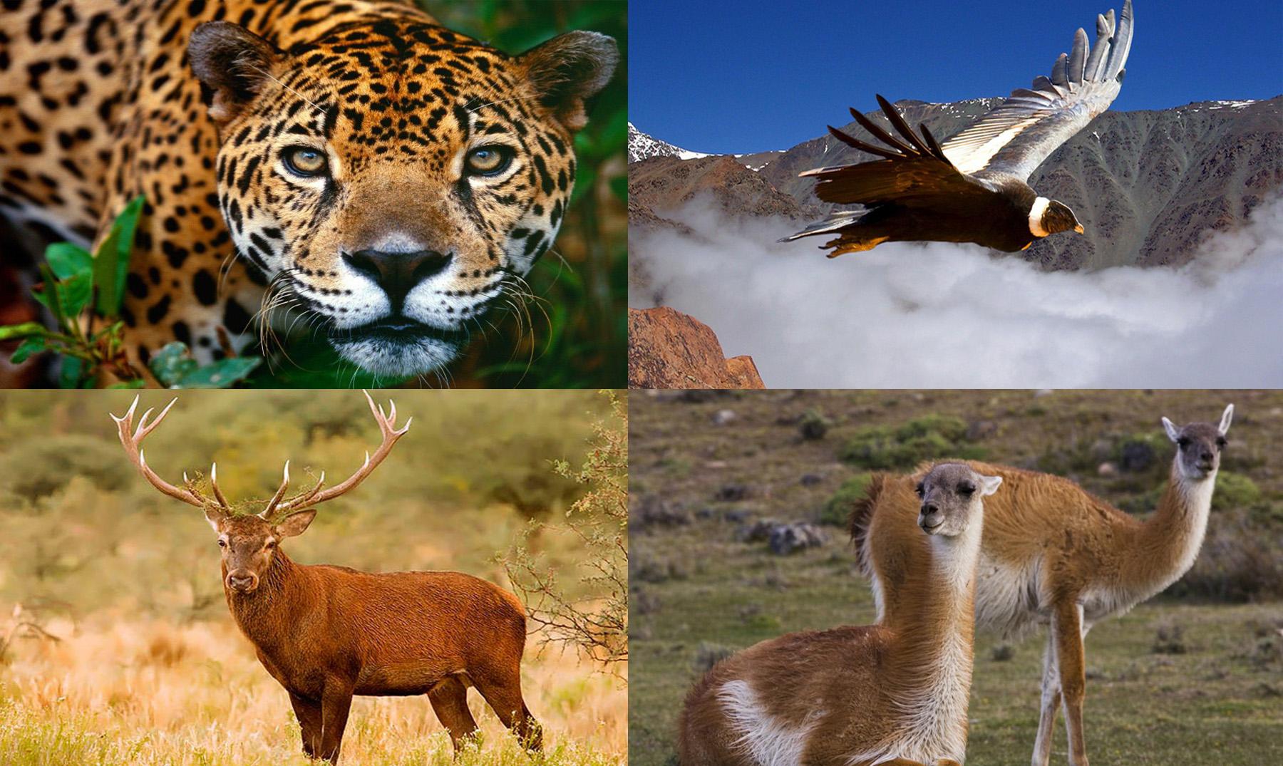 santuarios para animales en argentina  ii