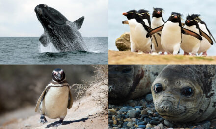 Santuarios para animales en Argentina (I)