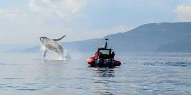 La hermosa ruta de las ballenas en Tadoussac (Canadá)