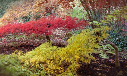 4 lugares para iniciar el otoño