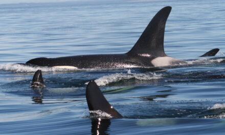 La hermosa ruta de las ballenas de Tadoussac en Canadá