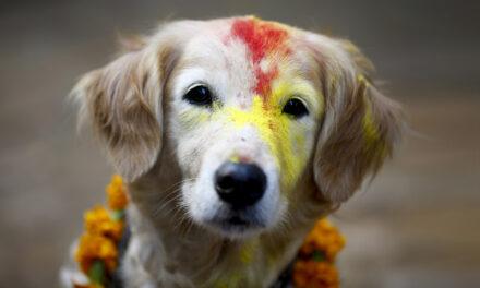 Kukur Tihar: festival en honor a los perros