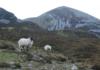 Croagh Patrick, el monte de San Patricio ¿Lo subirías descalzo?