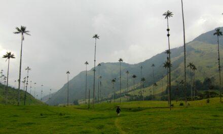 Valle de Cocora, en Colombia: ¡las palmeras más altas del mundo!