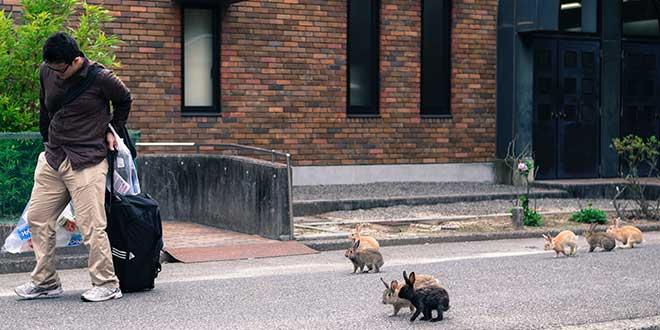 Conejos-en-Hokunishima