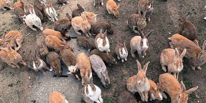Conejos-Hokunishima
