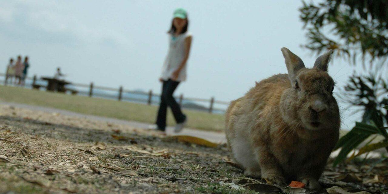 Okunoshima y sus peculiares habitantes