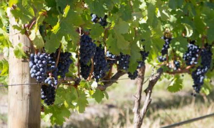 Stellenbosch, la región vinícola más grande de Sudáfrica