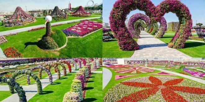Dubai miracle garden el jard n de flores m s grande del for El jardin del gigante