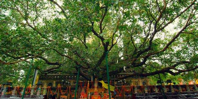Maha Bodhi3