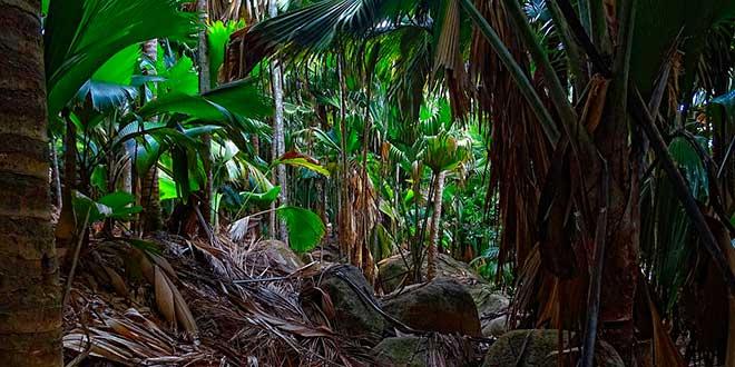 Valle-de-Mai-vegetacion