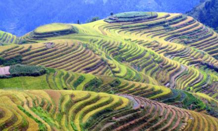 Terrazas de arroz de Longji, belleza y tradición