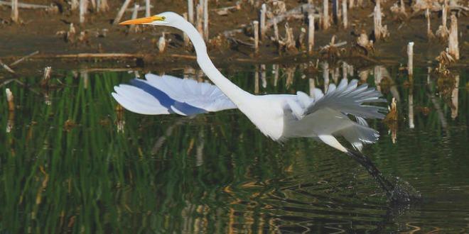 Animals' Agua Caliente Park