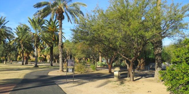 Trees Agua Caliente Park