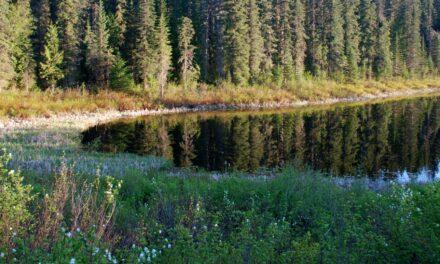 Parque Provincial Wells Gray, un regalo de la naturaleza