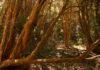 Parque nacional los Arrayanes, belleza natural