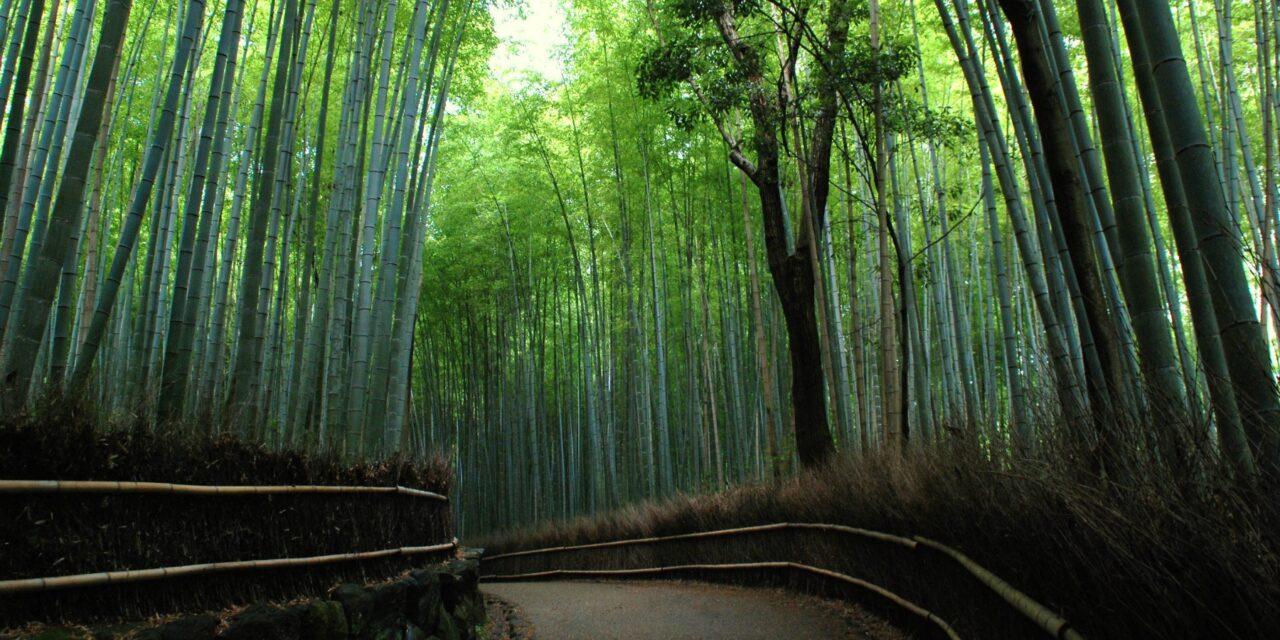 Bosque de bambú de Arashiyama, entre susurros y luces