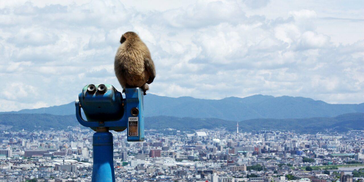 Parque de Iwatayama, el reino de los monos
