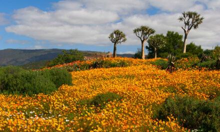Namaqualand, primavera en el jardín de los Dioses