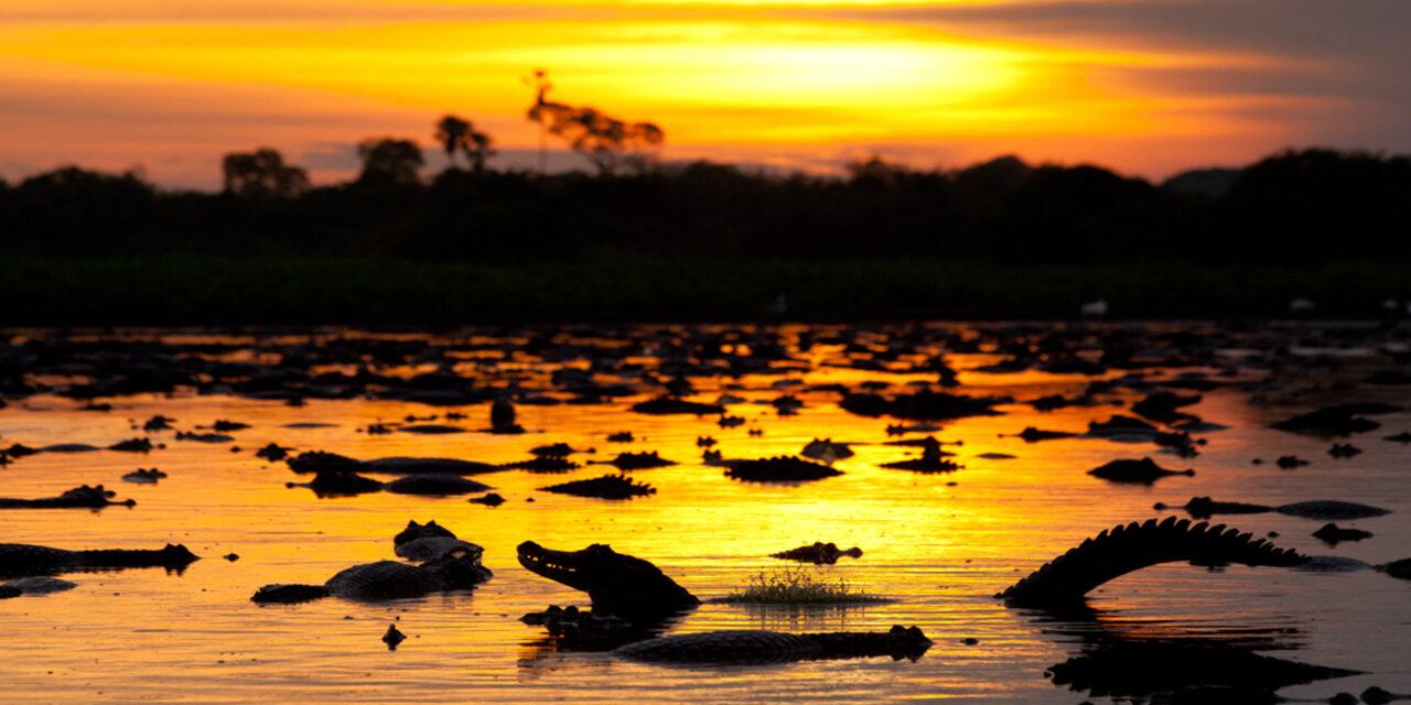 El pintoresco pantanal que no conocías en Brasil