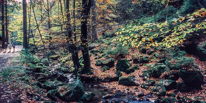 Bosque Teutónico