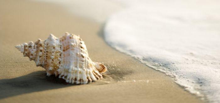 Concha marina en la arena   Como hacer buenas fotos de viajes