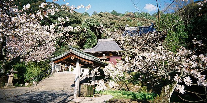 Templo Ishiteji, Shikoku Henro