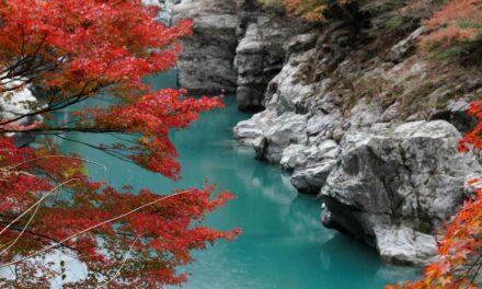 Shikoku Henro, el Camino de Santiago japonés