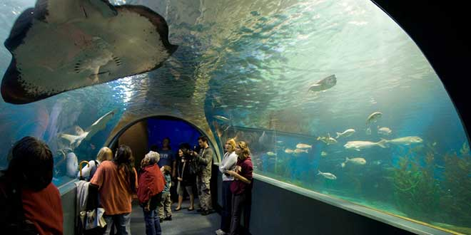 aquariun-melbourne