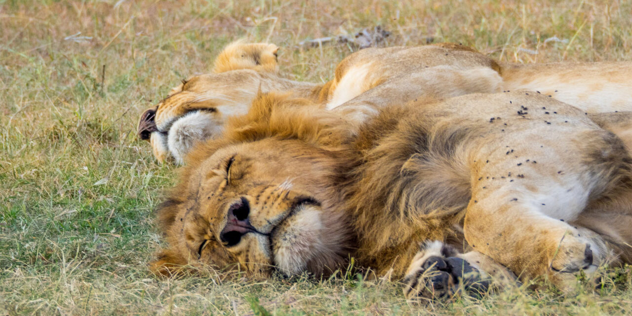 Los 5 mejores safaris africanos