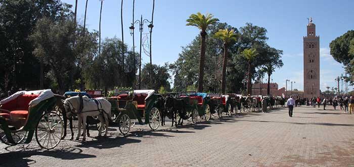 Carrozas-de-caballos-marrakech