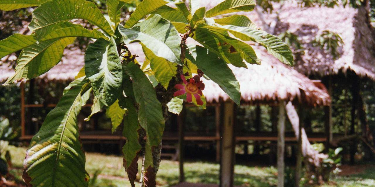 Iquitos, la otra cara de Perú
