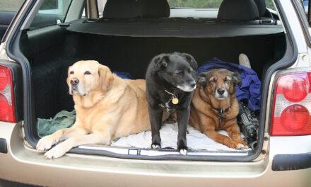 ¿Qué necesitas saber para viajar con tu mascota?