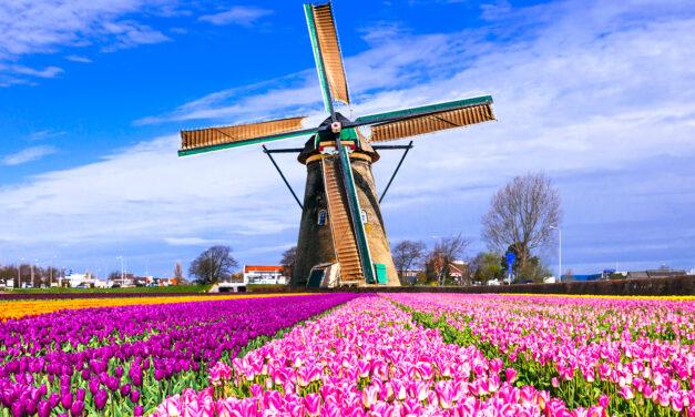 Praderas tulipanes, una explosión de color en los Países Bajos