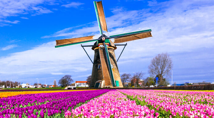 Praderas de tulipanes, una explosión de color