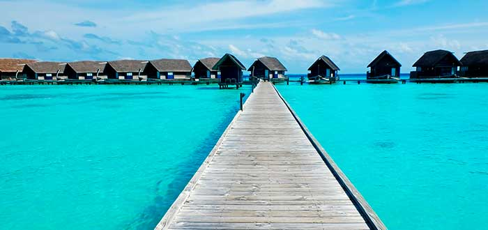 Coca Island