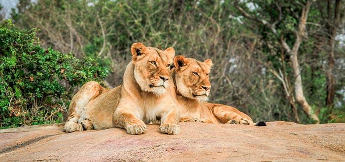 países africanos que visitar, Parque Nacional de Kruger, Suráfrica