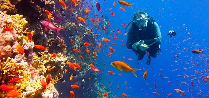 Gran Barrera de Coral, Australia, visitar de Oceanía