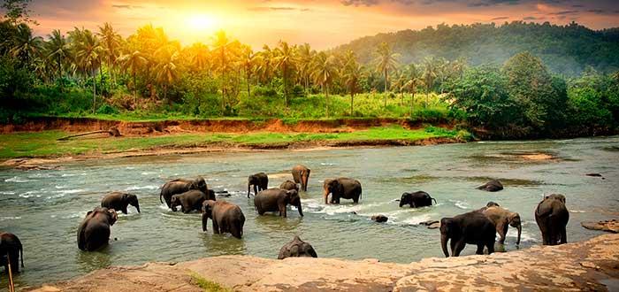 Destinos asiáticos 4 Sri Lanka