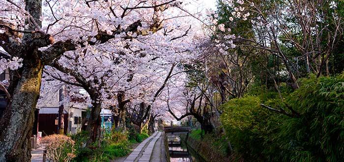 Qué ver en Kioto 7 Paseo del filósofo
