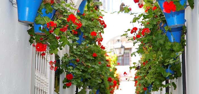 Que ver en Cordoba, Callejon de las Flores