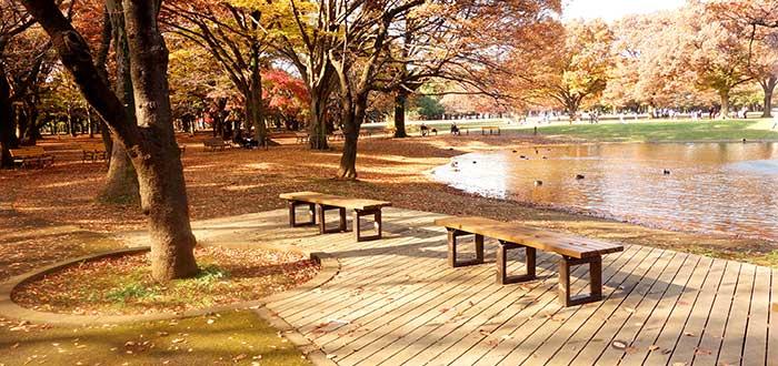 Qué ver en Japón | Parque Yoyogi