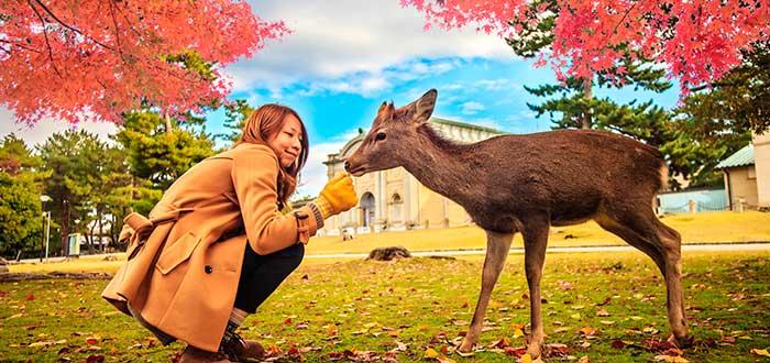Qué ver en Japón 20