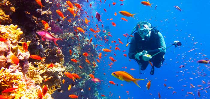 Bucear en el Mar Rojo