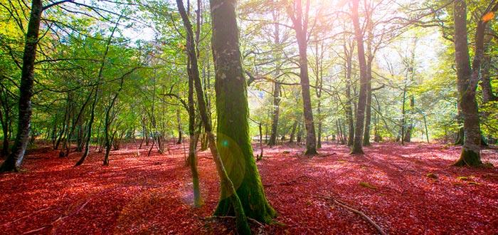 lugares más fotogénicos de España, Selva de Irati