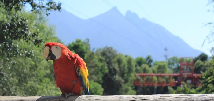 Qué ver en Monterrey loro