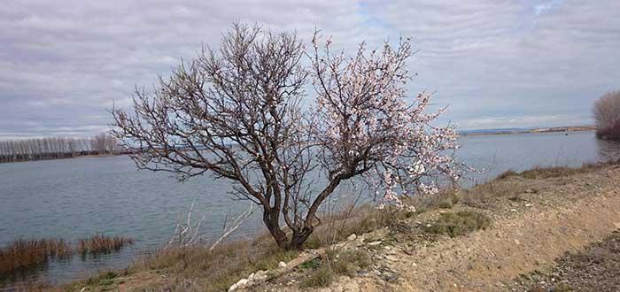 Que ver en Tudela | Laguna de Lor